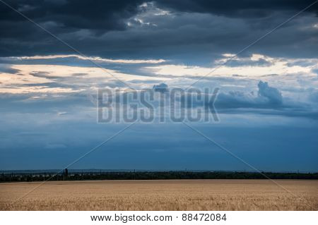 evening wheat field and blue sky summer landscape