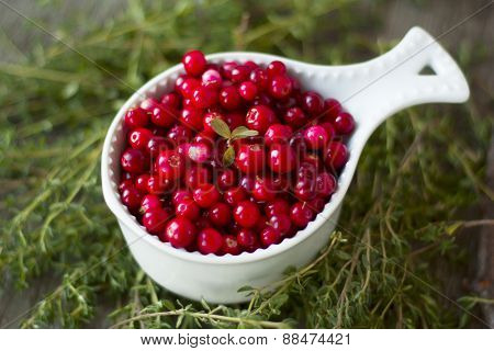 A Cup Full Of Lingonberry Forest Closeup