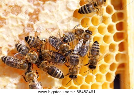 Bees On A Beeswax
