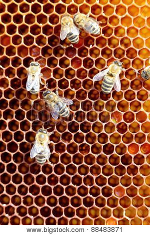 Honey Bees On Cell