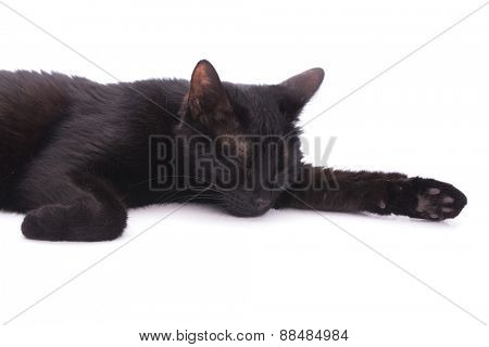 Black cat asleep on white, in a studio
