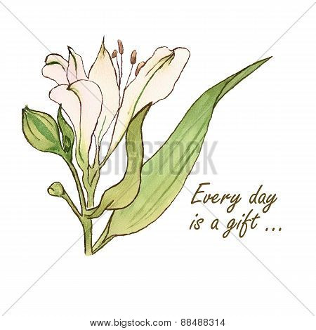 White watercolor Lily flower vector