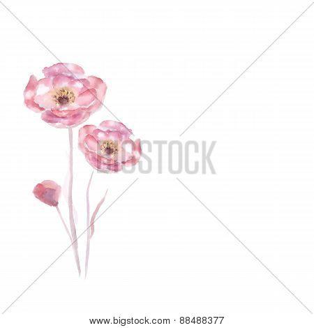 Pink watercolor Rose flower vector