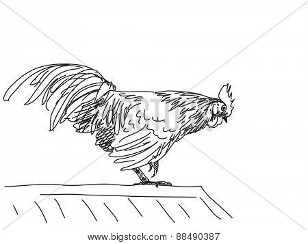 Sketch of rooster, Hand drawn vector illustration