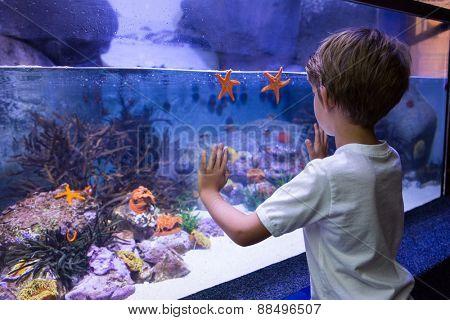 Young man touching a starfish-tank at the aquarium