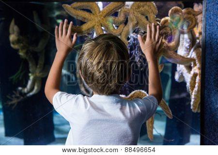 Young man touching starfish-tank behind the camera at the aquarium