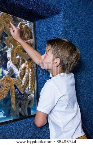 Young man pointing a starfish-tank at the aquarium