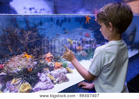 Young man looking at starfish in tank at the aquarium