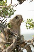 foto of monkeys  - Monkey on a tree - JPG