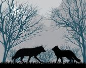 stock photo of moonlight  - Two wolves in forest in the moonlight - JPG