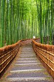 foto of bamboo forest  - Path to bamboo forest - JPG