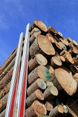 picture of semi trailer  - Detail of spruce logs stacked up on a logging truck trailer with background of blue sky - JPG