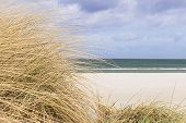 pic of dune grass  - Picture of beach with dune grass in sand on the coast of the Baltic Sea Germany with free space - JPG