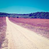 pic of dirt road  - Dirt Road between Olive Groves in Tuscany Italy Instagram Effect - JPG