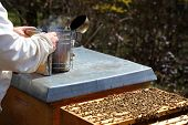 picture of smoker  - bee keeper is preparing a smoker near bee hive - JPG