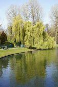 picture of ponds  - BRUSSELSBELGIUM 16 APRIL 2015 - JPG