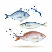 stock photo of shell-fishes  - Watercolor fish - JPG