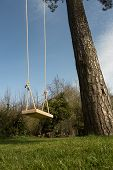 stock photo of tall grass  - Tree swing in the garden with a tall tree blue sky and green grass - JPG