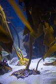 picture of algae  - Fish hiding into yellow algae at the aquarium - JPG