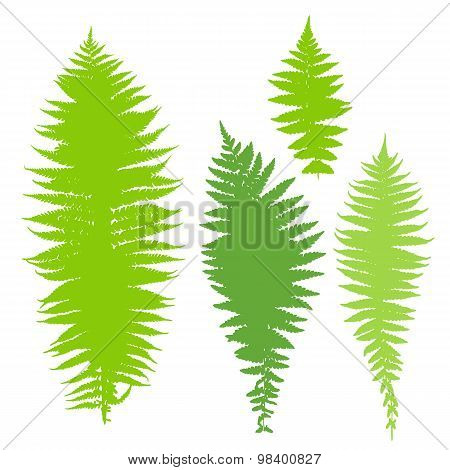 Vector illustration of green dry fern set
