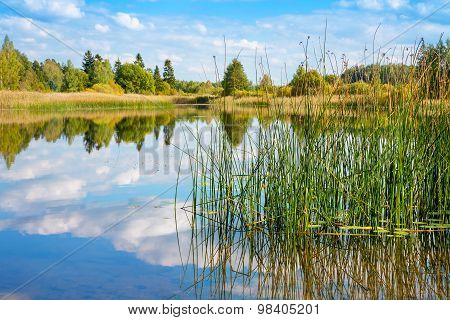 Forest Lake. Estonia