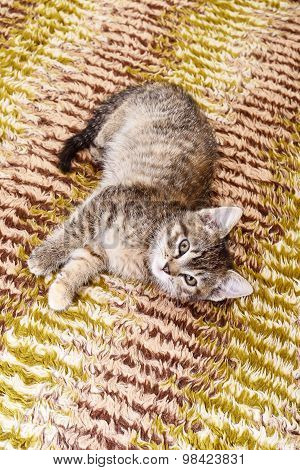 Kitten On Textile Background