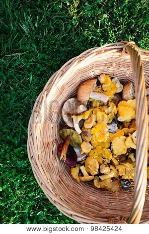 Fresh Mushrooms In A Basket, Top View