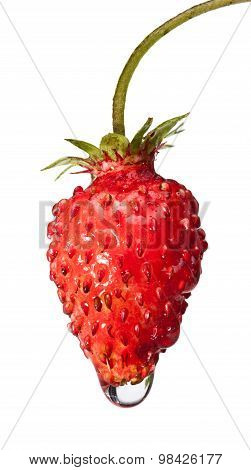 Ripe Strawberry With Water Drop