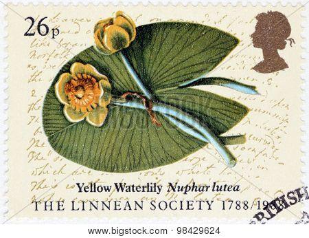 Yellow Waterlily