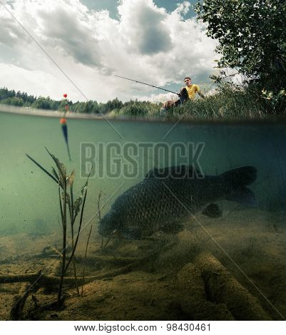Split shot of the freshwater pond with fisherman above the surface and big fish (Carp of the family of Cyprinidae) grazing underwater over the bottom.