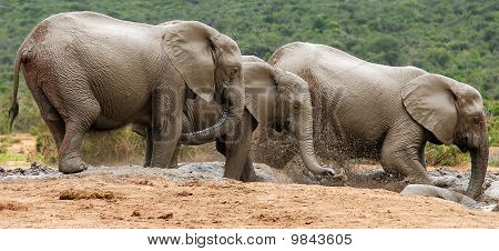 Elephants at watering place
