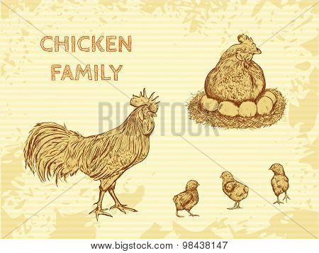 organic farm vintage poster with family chicken: cock, hen with chickens. Hand drawn retro vector il