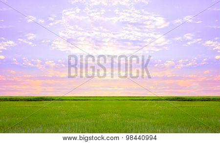 Landscape green grass on a background sky sun rises.