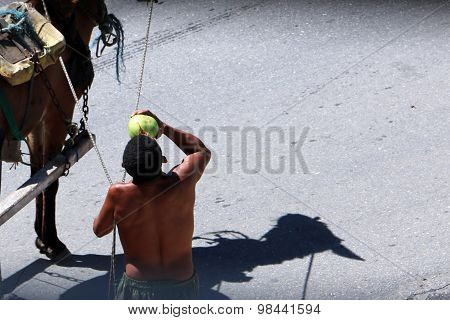 Man drinking coconut water and  horse shadow in Brazil