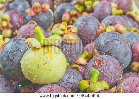 Green Mangosteen