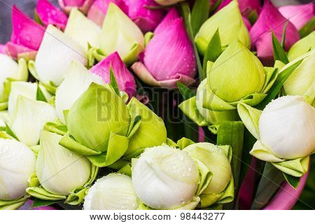 Folded Petal Lotus for paying respect to Buddha