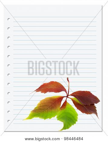 Exercise Book With Multicolor Virginia Creeper Leaf