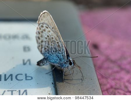 Butterfly Sits On The E-book