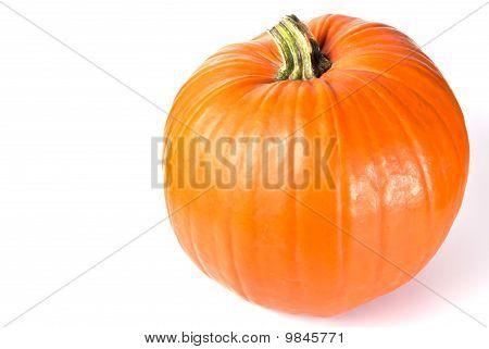 Pumpkin Text Area V4