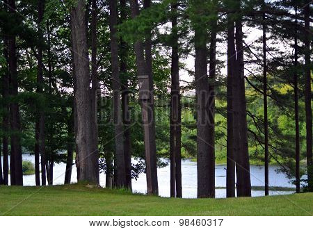 Lake through the trees