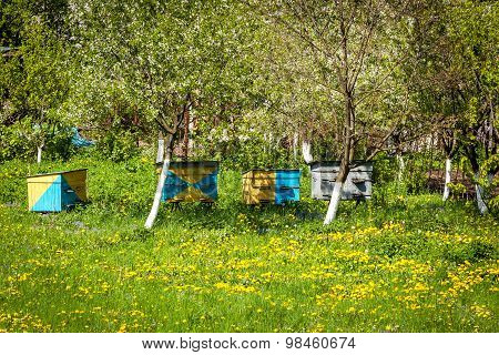 Bee, Farm, Honey, Apiary, Beekeeping, Hive, Meadow, House, Summer, Nature, Production, Countryside,