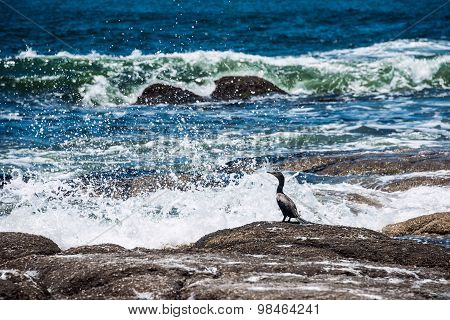 Cormorant Sitting On A Rock In The Surf, The National Park Of Santa Teresa, Rocha, Uruguay