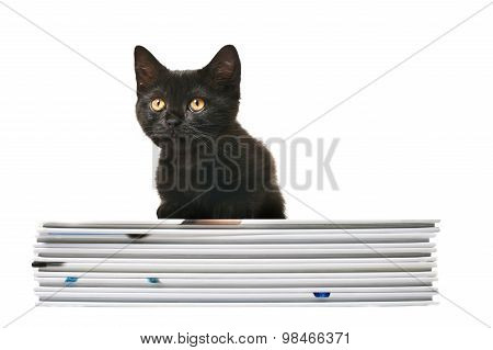 Black British Shorthair Kitten With Books