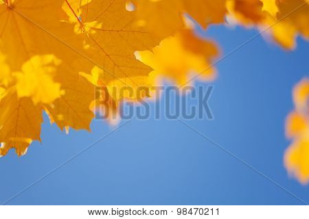 Autumn sky and yellow maple leaves border