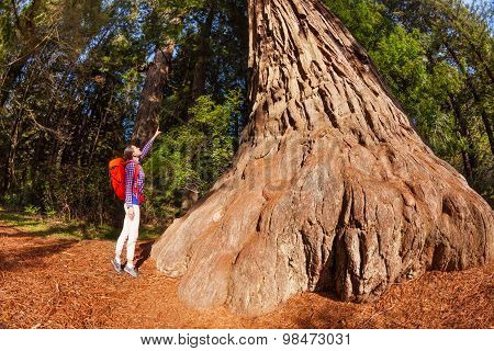 Woman pointing at big tree in Redwood California