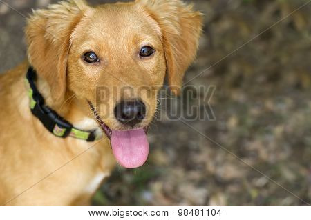 Cute Dog Looking Up