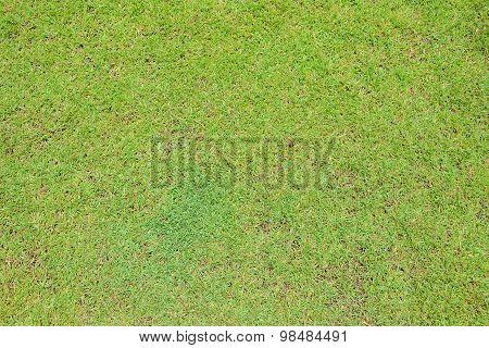 Green Grass On Ground Texture Background