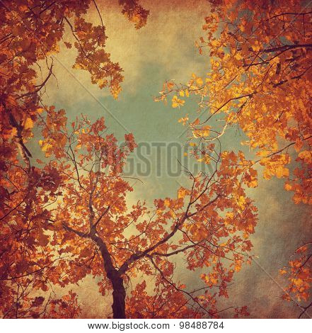 Autumn leaves of oak on the sky background.  Photo in retro style. Added paper texture. Toned image.
