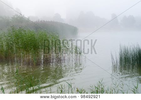 Reed And Sedge Thicket On The Lake, Misty Morning Background