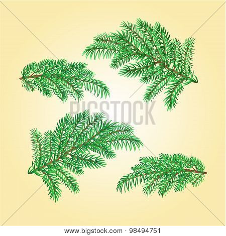 Christmas Decorations Spruce Twigs Vector